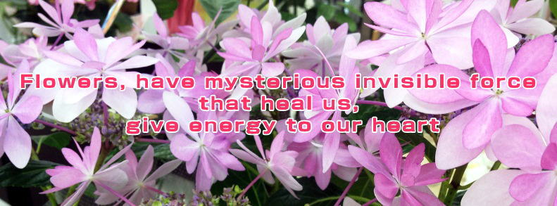 Flowers, have mysterious invisible force that heal us,  give energy to our heart